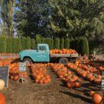 ハロウィンの時期の風物詩Pumpkin Patch